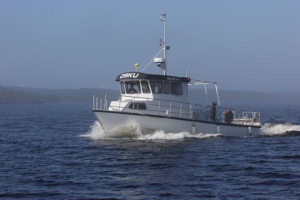 Kalat Inarijärveen istutetaan siihen tarkoitukseen valmistetulla aluksella. Kuva: Ari Savikko